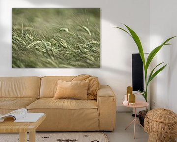 Weizen in seiner schönsten Form. von Johan Buitelaar