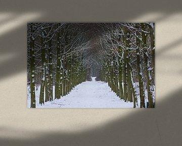 Winter in het bos, een laan bomen met sneeuw van Discover Dutch Nature