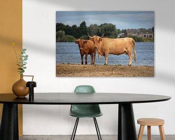 Koeien aan het water van Cornelius Fontaine