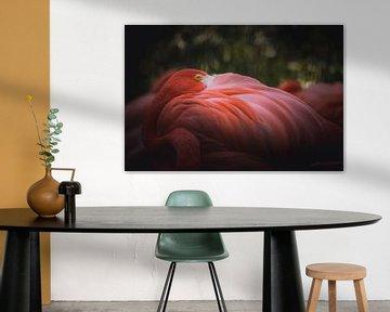 Flamingo beobachtet Sie von Sandra Hazes
