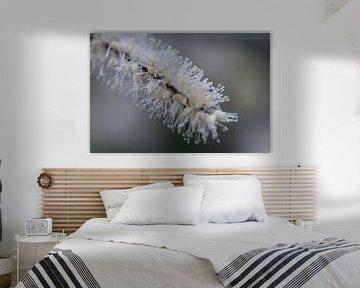 weiße Herbstblume von Tania Perneel