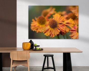 orange Herbstblumen von Tania Perneel