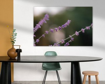 violette Herbstblume von Tania Perneel