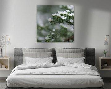 weiße Herbstblumen von Tania Perneel