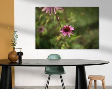 rosa Blume von harm Henstra