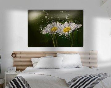 Gänseblümchen von Harry Stok