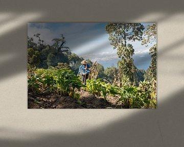 A farmer working his land on a mountain von Michiel Ton
