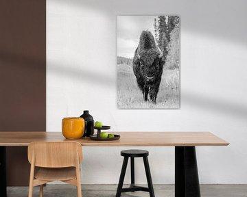 Bizon van Jan-Willem Mantel