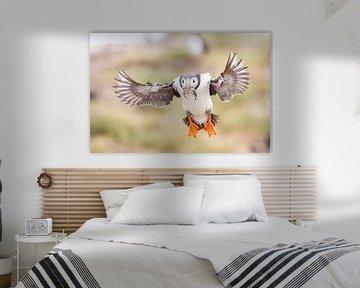Terugkeer van de Papagaaiduiker van Jan-Willem Mantel