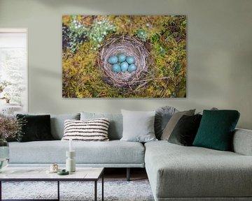 Nest des Kramsvogels von Jan-Willem Mantel
