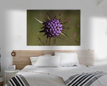 Violette Blume mit Stacheln und grünem Hintergrund von Joost Adriaanse