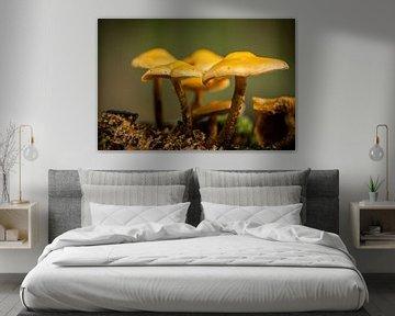 Pilze in einer Gruppe zusammen