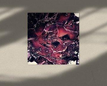 Michael Detter - Roses1 von Michael Detter