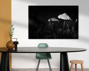 Miniaturwelt in Schwarz-Weiß von Gerard de Zwaan