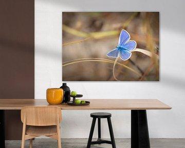 Schmetterling von wilma ten Bhömer