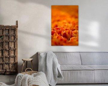 Tulpenzee van Joram Janssen