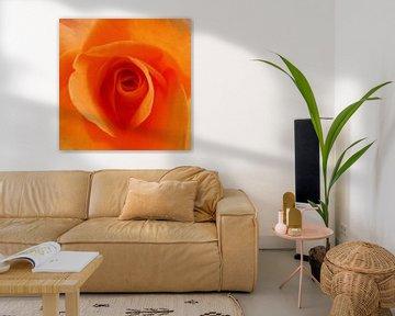 Eye of the Rose van Femke Vergeer