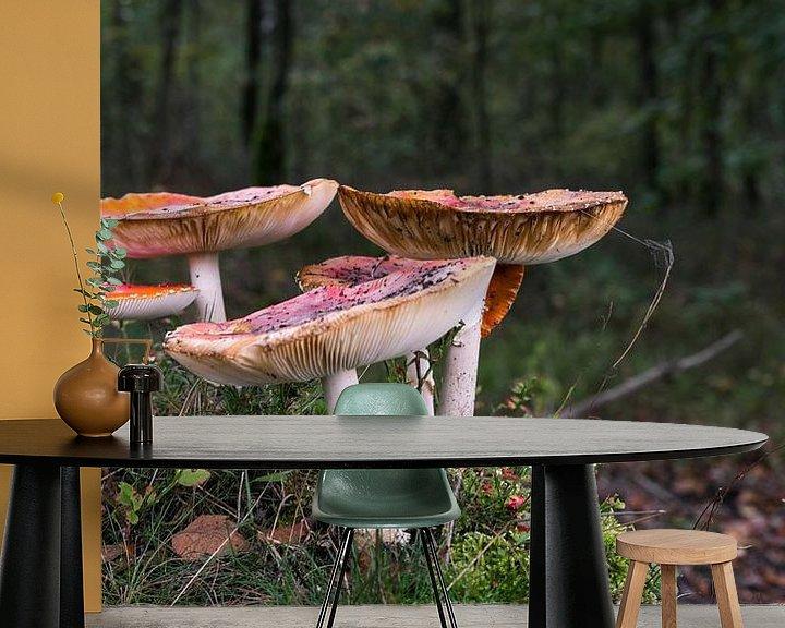 Impression: groupe de champignons de la mouche agarique sur ChrisWillemsen