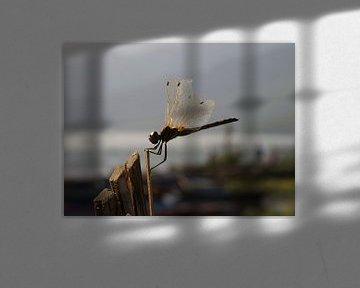 Dragonfly van Maarten van Dam