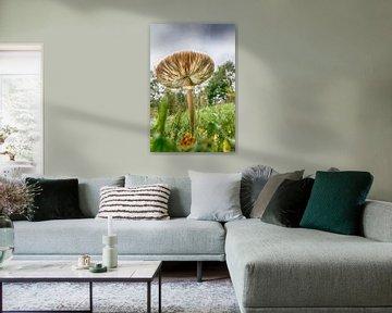 Pilz im Herbst von Mark Bolijn