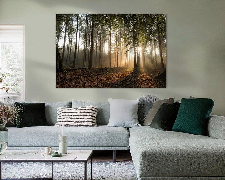 Sfeerimpressie: Mystiek bos met zonneharpen van Moetwil en van Dijk - Fotografie