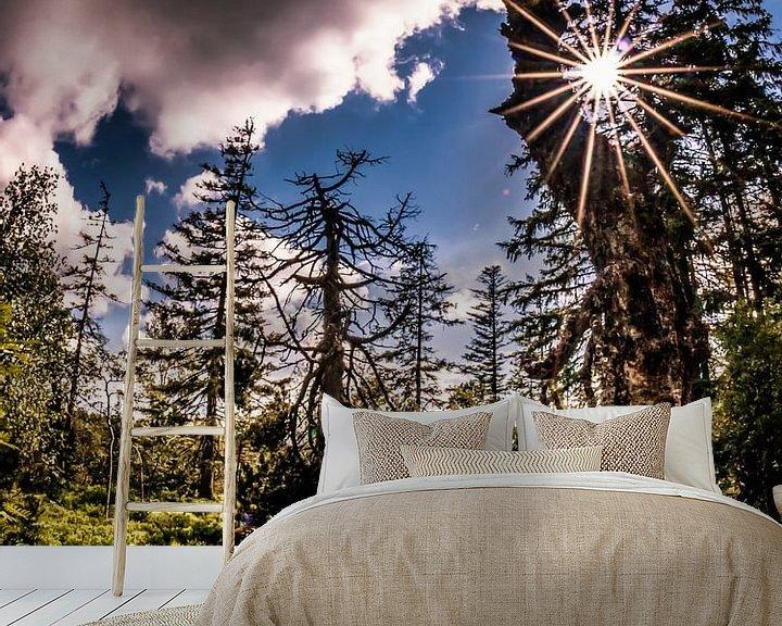 Beispiel fototapete: Alter Baum von Marcus Lanz