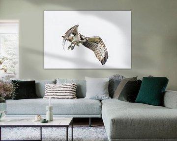 Fischadler von Arie Jan van Termeij