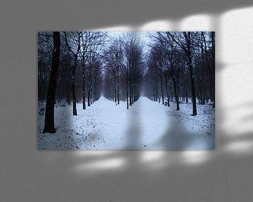 Winter in het bos, twee rijen bomen met sneeuw van Discover Dutch Nature