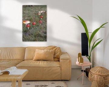 paddenstoelen van Danielle Holkamp