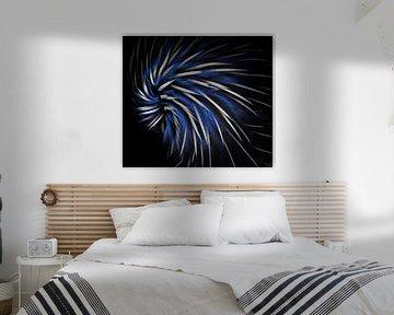 Zwart, wit & blauw