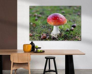 Paddenstoel van PhotoManiX Digital Photography