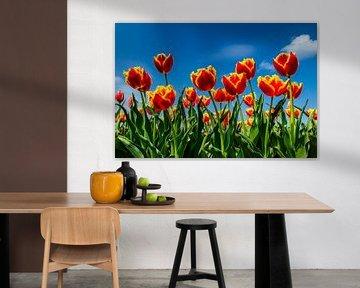 Feld mit blühenden Tulpen von Fred van Bergeijk