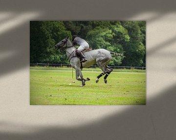 Joueur de polo sur son gris sur Hamperium Photography