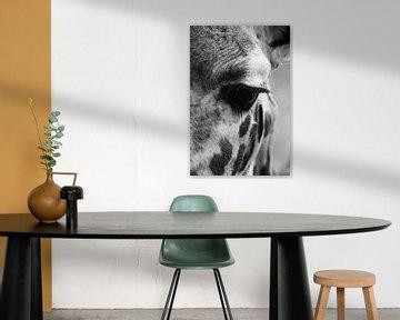 Oog in oog met de giraffe van Tesstbeeld Fotografie