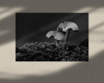Drei Pilze in Schwarz und Weiß von Gerard de Zwaan