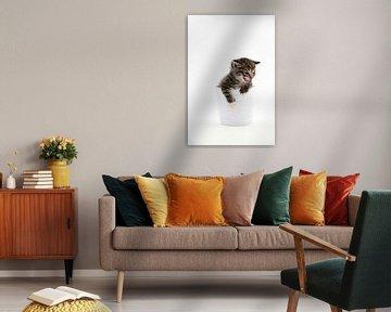 Kätzchen von Tesstbeeld Fotografie