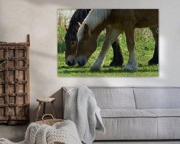 Zwei grasende Pferde in Nahaufnahme von Geert van Kuyck