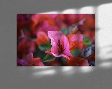 Rosa Blumen von Manon Gheeraert