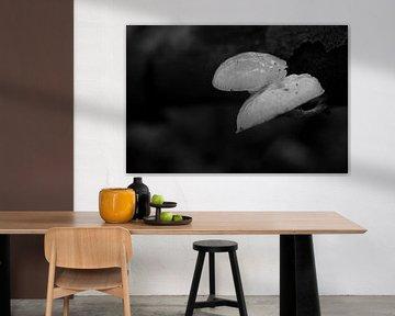 Zwei Pilze in Schwarz und Weiß von Gerard de Zwaan