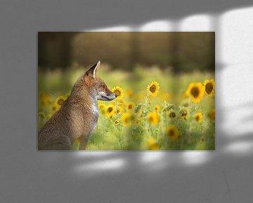 Fuchs zwischen den Sonnenblumen von Carla van Zomeren