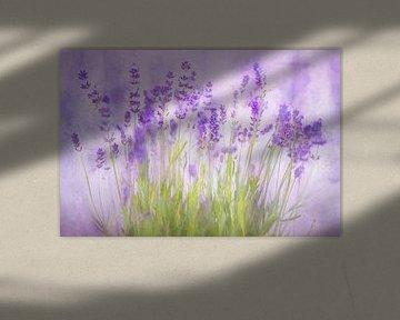 Lavendel in Blütezeit von Arjen Roos