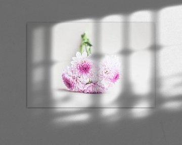 Blumenstrauß von Dahlien von Kristof Ven