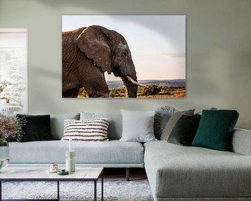 Alpha Elefant von Martin Schuit