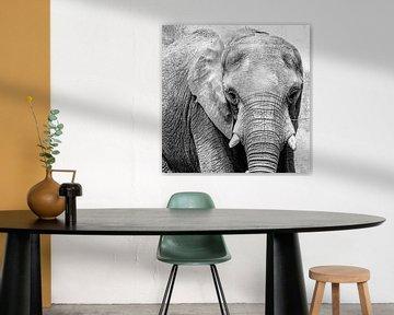 Elefant in schwarz-weiß von Abraham van Leeuwen