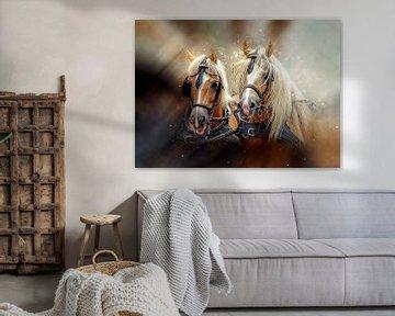 De beaux chevaux sur Peter Roder