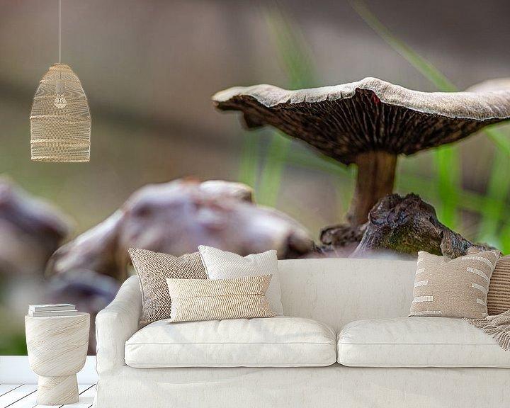 Sfeerimpressie behang: Paddestoel van Ingrid Aanen