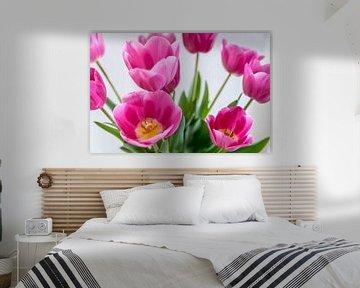 pinkTulpen in Vase von ProPhoto Pictures