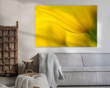 Its yellow! van Ramon Bovenlander