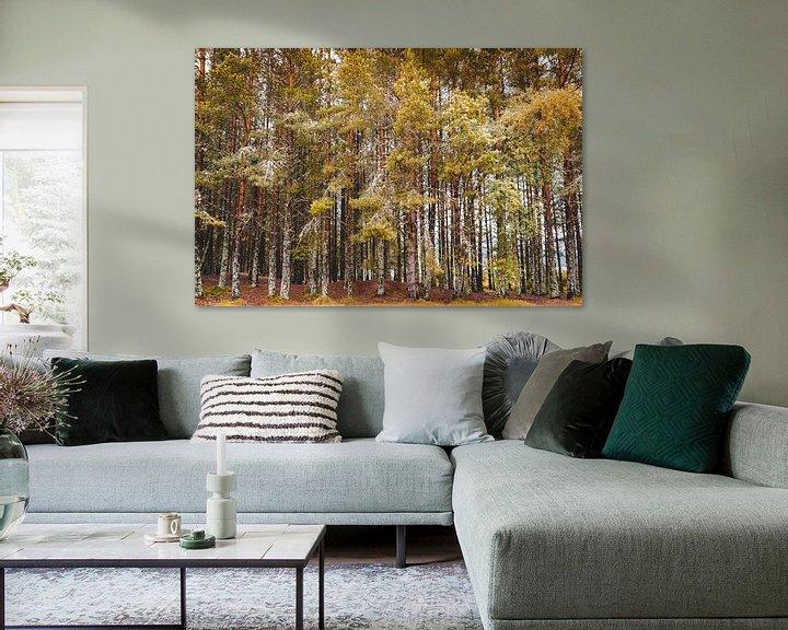 Beispiel: Bäume im Herbst von Thea.Photo