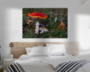 Pilz 3 von Wesley Klijnstra